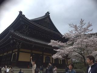 京都花見写真2