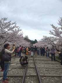 京都花見写真1